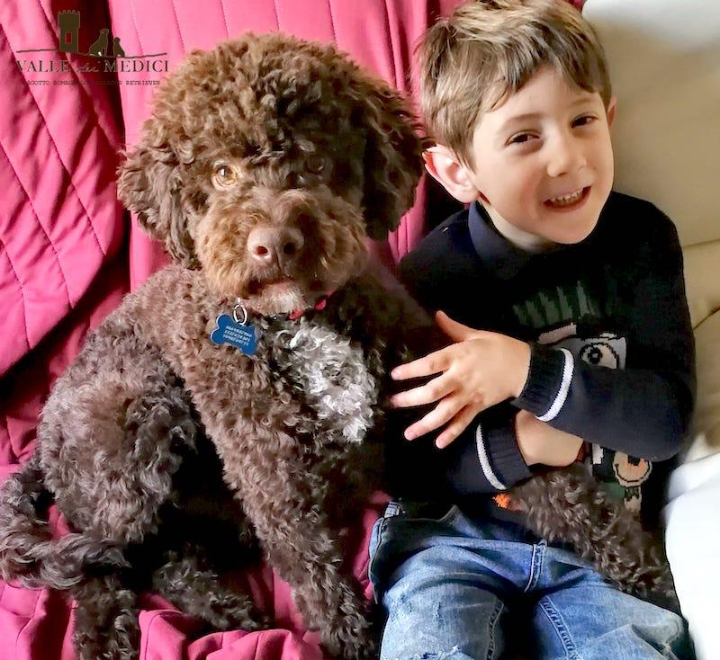 lagotto cane da compagnia famiglia e bambini