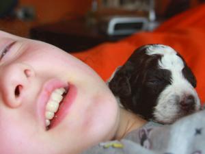 cucciolo lagotto romagnolo bambini