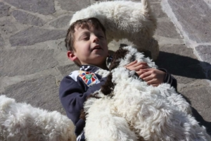 allevamento lagotto romagnolo bambini e cuccioli