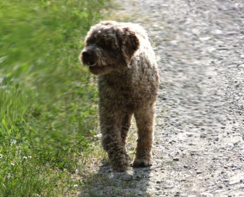 Vermi intestinali e parassiti del cane