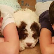 Lagotto Romagnolo cane da compagnia famiglie e bambini