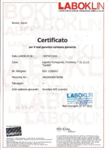 certificati salute epilessia lagotto romagnolo