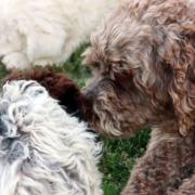 socializzazione cuccioli imprinting ed esperienze