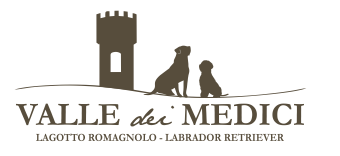 Allevamento Lagotto Romagnolo - Cuccioli Valle dei Medici