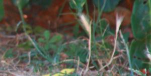 pericoli cane lagotto romagnolo forasacchi
