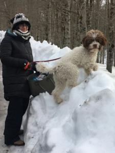 lagotto romagnolo e la neve