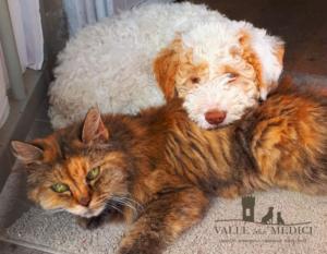 lagotto cane gatto amici