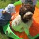 Stress nel cane lagotto