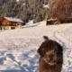 primo viaggio cucciolo lagotto